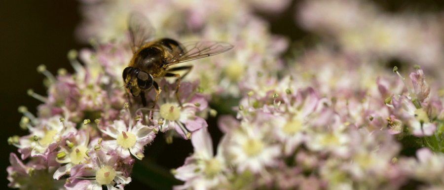 Close up of bee on a flower