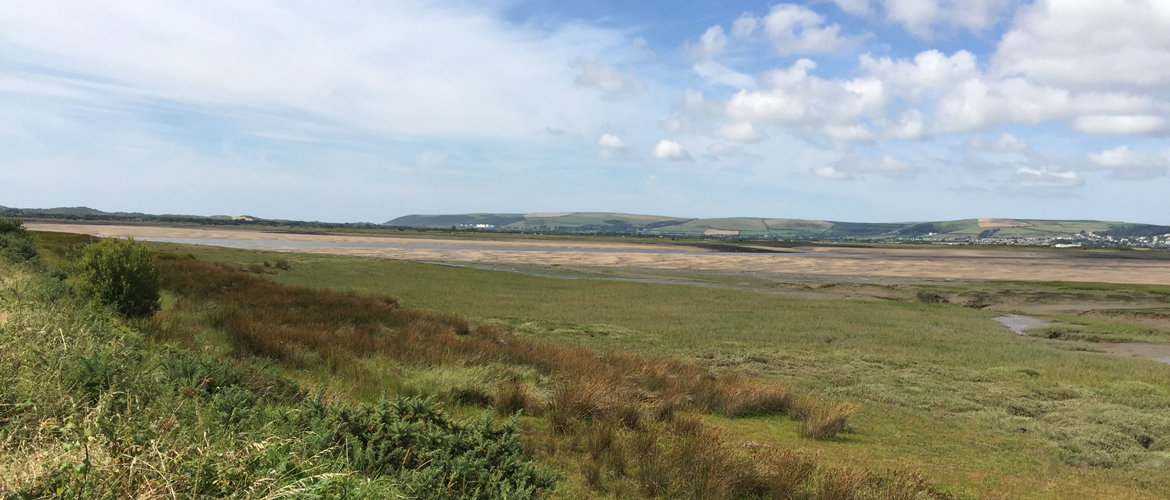 North Devon Saltmarsh