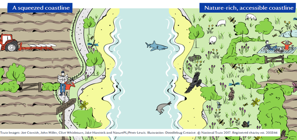 illustration showing a squeezed coastline and a nature-rich coastline