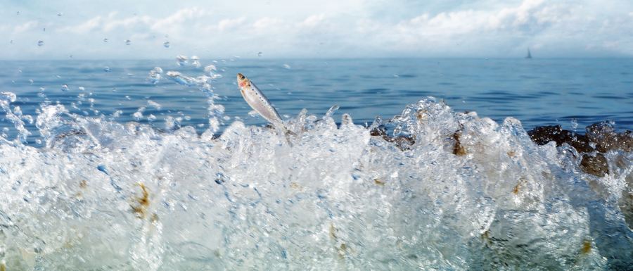 Breaking wave jumping and fish